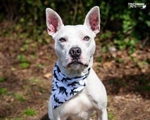 TO APPLY GO TO wwwLuckyDogRefugecom Zeros a hero This boy has been through a lot in life but i