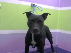 Chip is currently enjoying time in foster care If you would like more information about Chip please