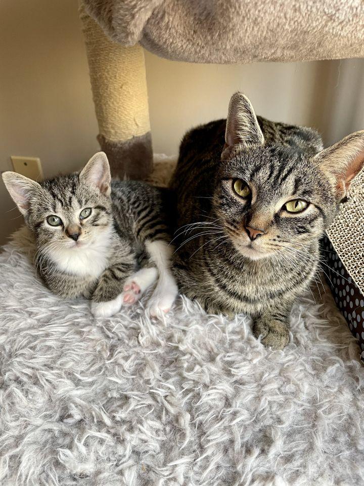 Lulu & Lynx 1