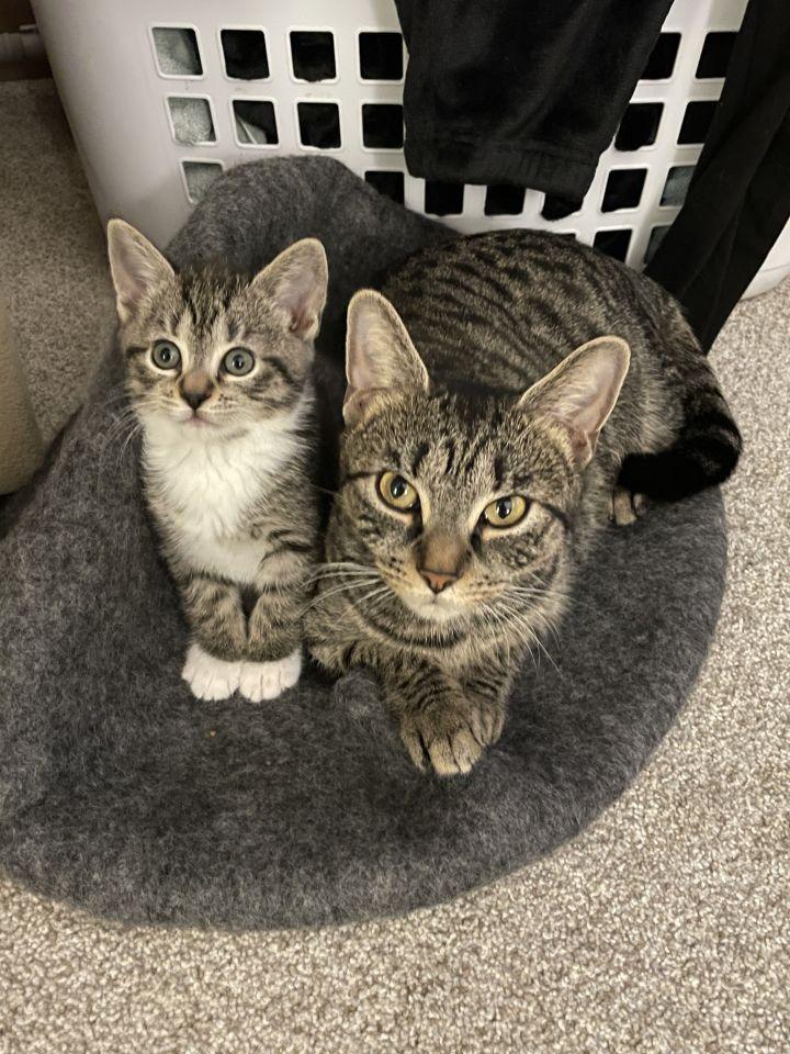 Lulu & Lynx 4