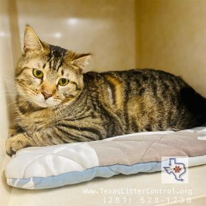 Well hello Im Amarillo I am a super chill laid back kitty I love people but I dont need all