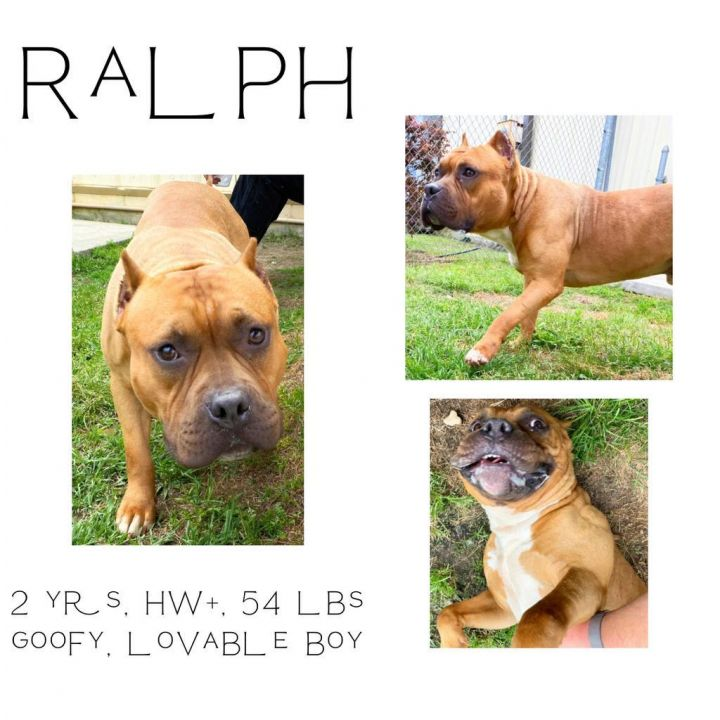 Ralph 1
