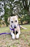 Molly - Fostered in Rhode Island