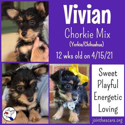 Vivian 1