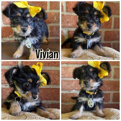 Vivian 2