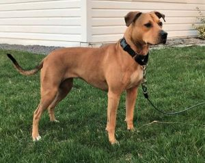 You can fill out an adoption application online on our official website Muffin is a spayed female