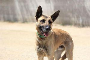 MR. LOBO Mixed Breed Dog