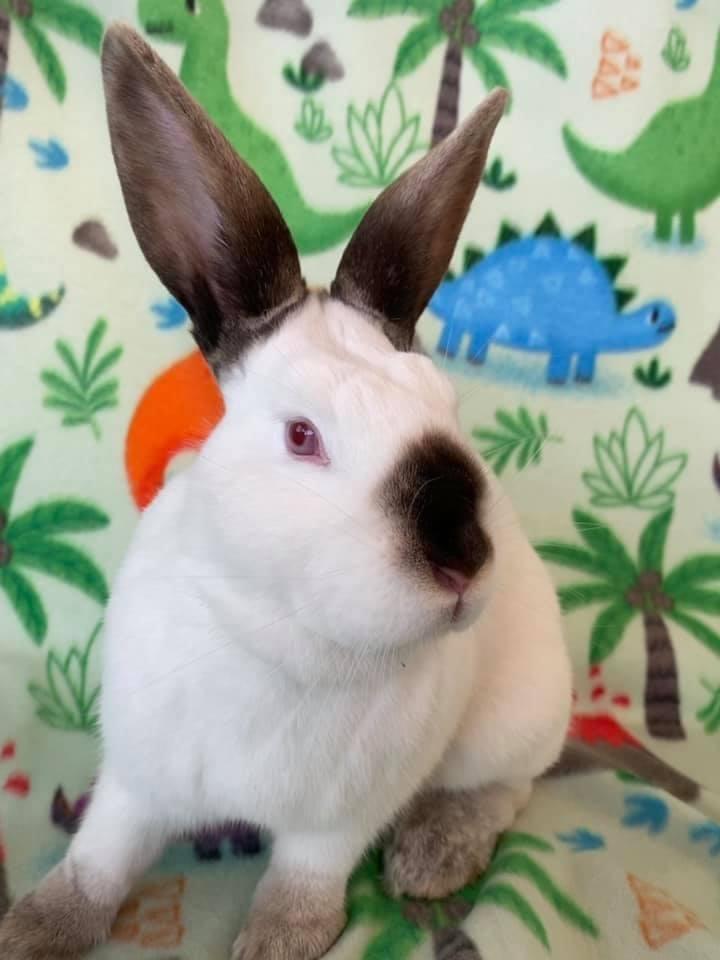 Lil' Bunny 2