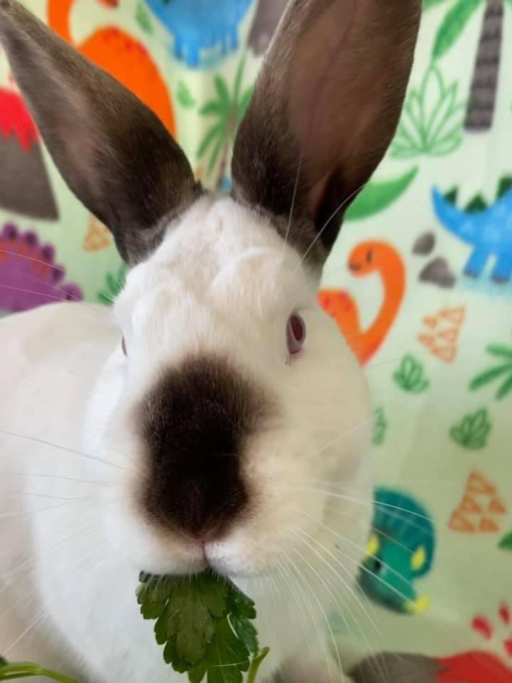 Lil' Bunny 3