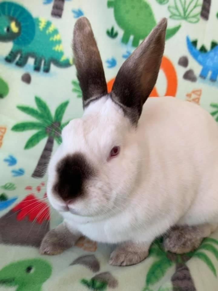 Lil' Bunny 5