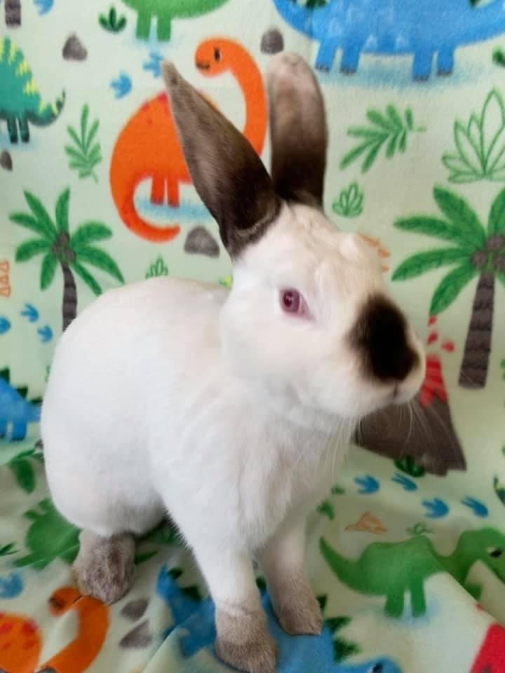 Lil' Bunny 6