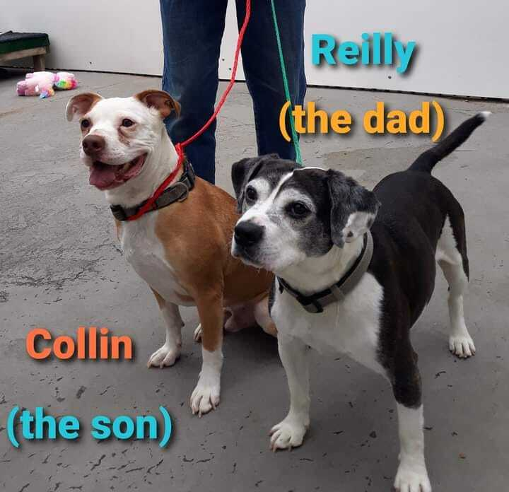 Collin & Reilly 1