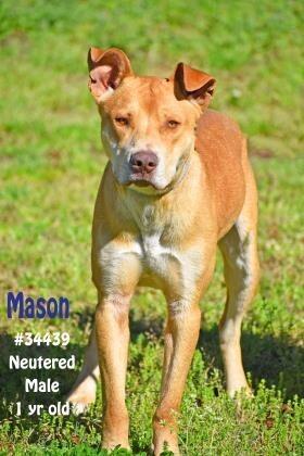 Mason 1