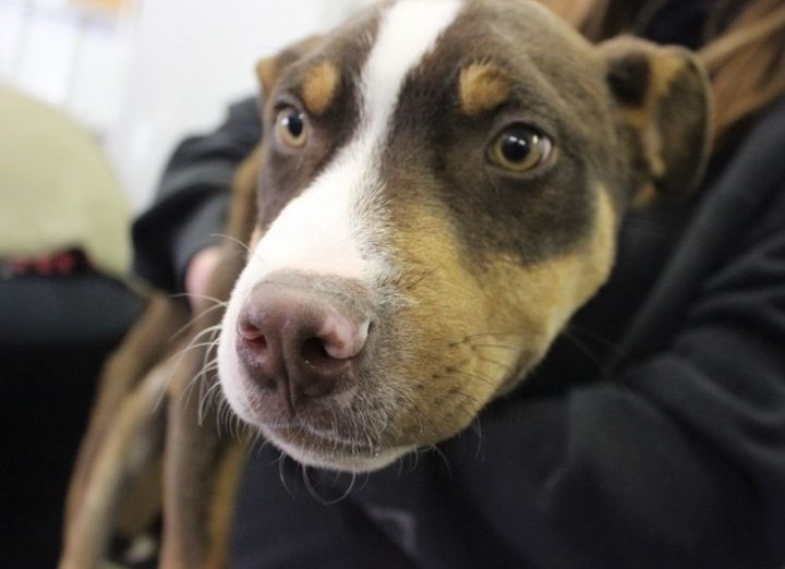 Fifty***ADOPTION PENDING*** 3