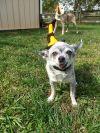 Buddy (Senior)