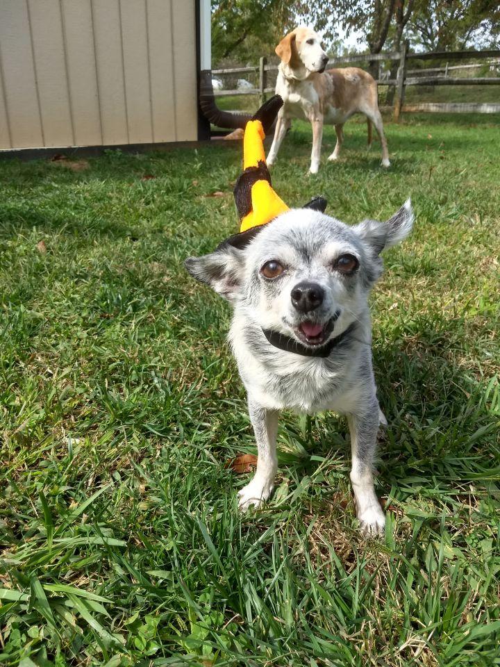 Buddy (Senior) - Sponsorship ONLY 3