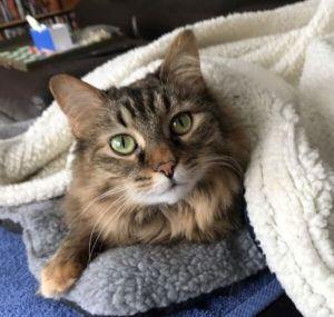 ?bust=1618954926&width=300 - Adopt a Cat