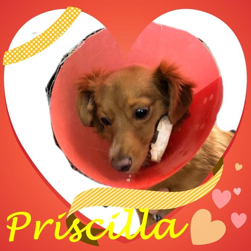 Priscilla detail page