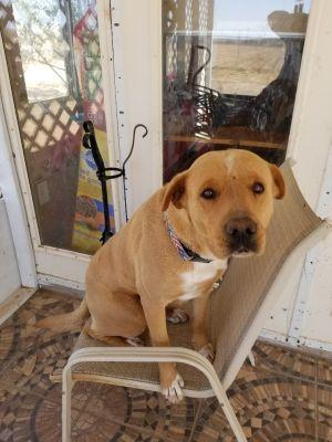 Bud's dog Bandit