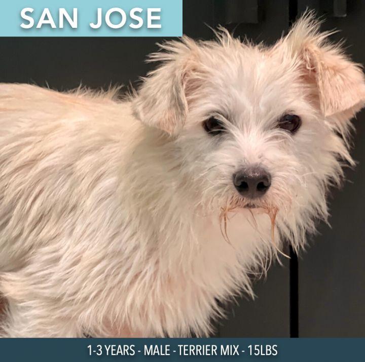 San Jose 1