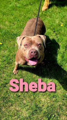 Sheba detail page