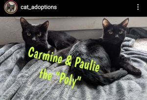Carmine and Paulie to us via a situation of poisoning of cats in Tehachapi They are super sweet and