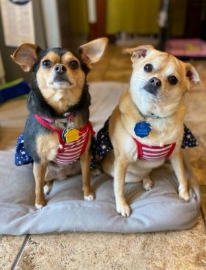 Adorable bonded sweethearts Taco and Tamale are a hoot Friendly and playful and do not ask much of