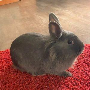 Lacey Bunny Rabbit Rabbit