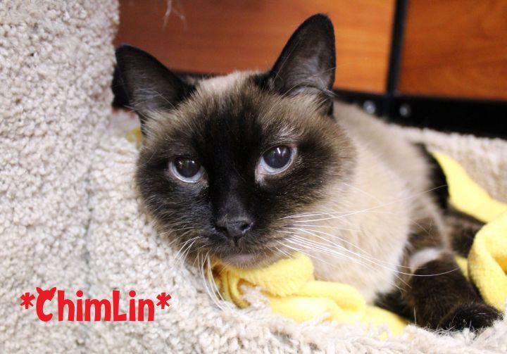 Chimlin 1