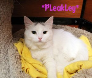 Pleakley