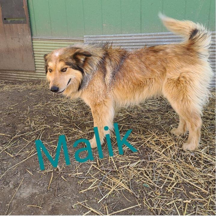 Malik 2