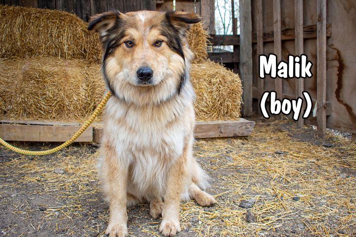 Malik 3