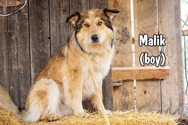 Malik 5