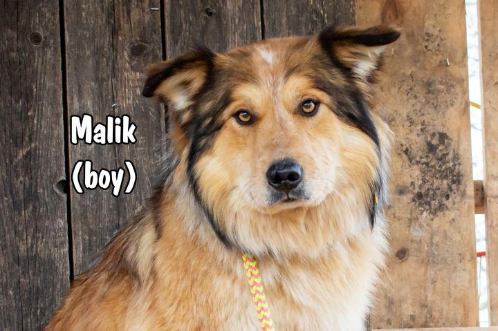 Malik 1