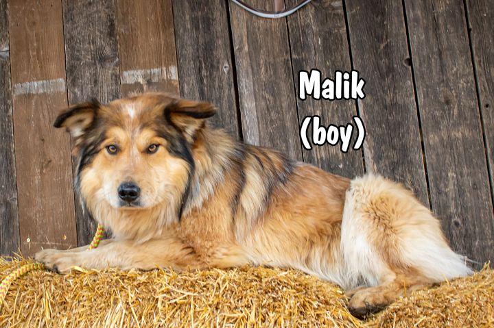 Malik 6