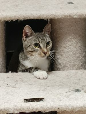Sweet and playful loving girl Shy at first Saved from a life on the streets when family moved and