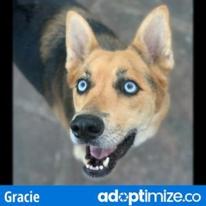 Gracie is enjoying some time in Foster Care If you are interested in meeting this kiddo please e-m