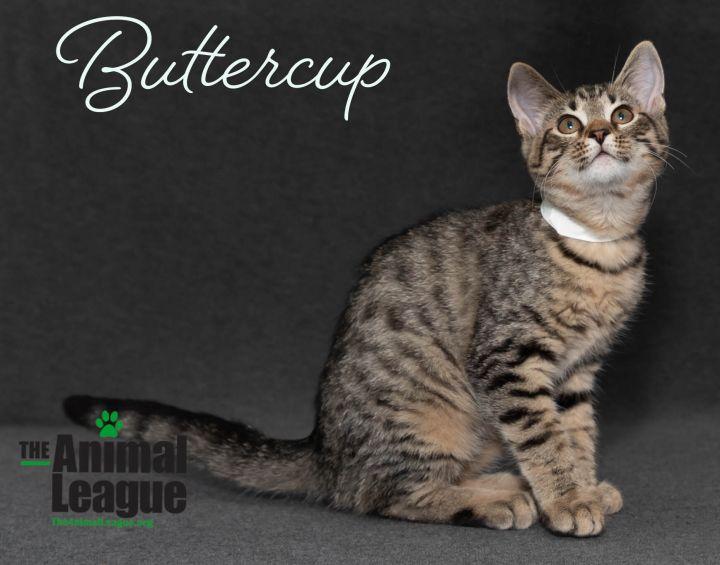 Buttercup 1