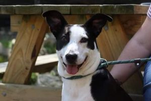 For more information on Lucy call AWS at 860-354-1350 email animalwelfaresoctysnetnet or visit o