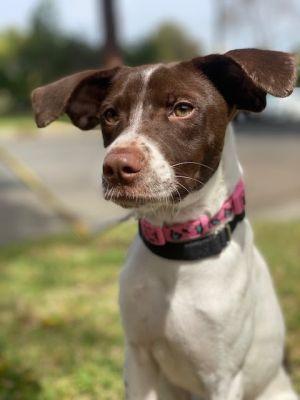 Bonita Mountain Dog Dog