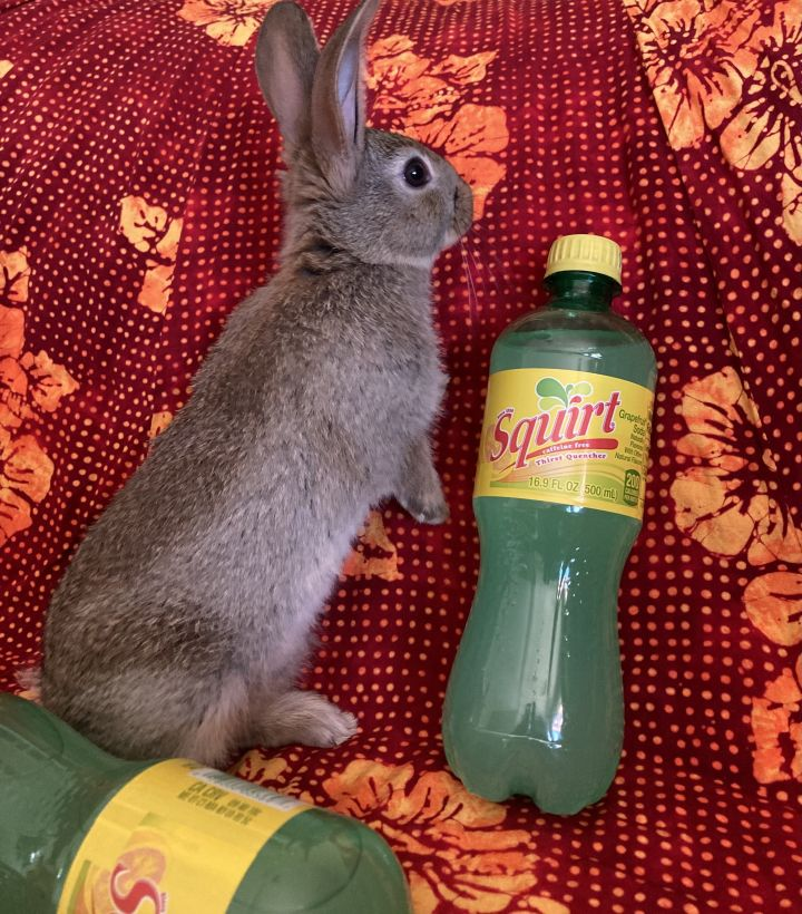 Squirt 3