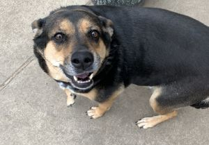 COURTESY LISTING FOR REHOME IN DALLAS TX - NOT AFFILIATED WITH LIVING GRACE  HEY NIKKI  HEY NI