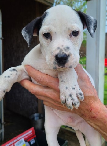 Gunnison, an adoptable Mixed Breed in Lenoir, NC_image-1