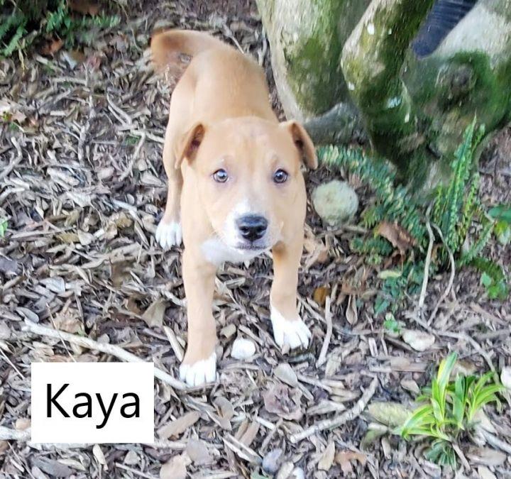 Kaya 2
