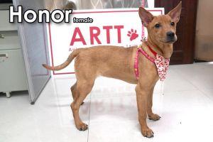 Honor Mountain Dog Dog