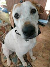 TOBIAS Hound Dog