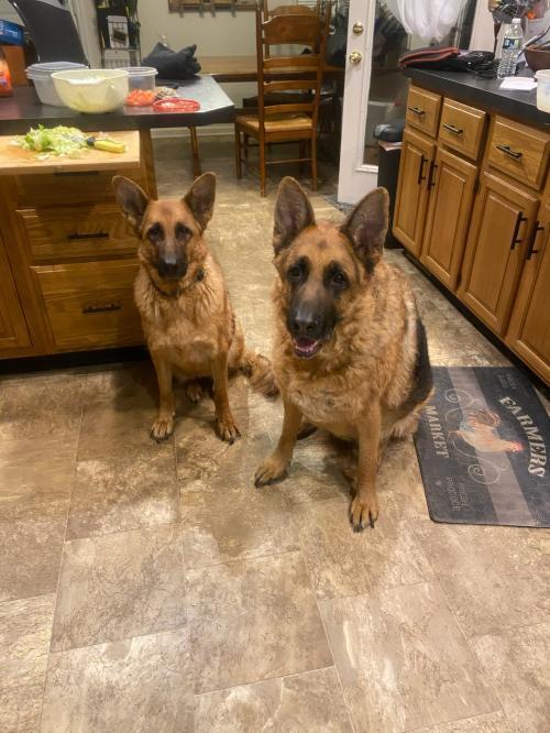 Dutchess and Duke