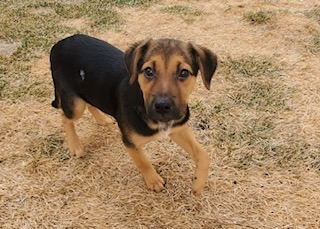Spinach, an adoptable Mixed Breed in Minot, ND_image-2