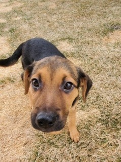 Spinach, an adoptable Mixed Breed in Minot, ND_image-3