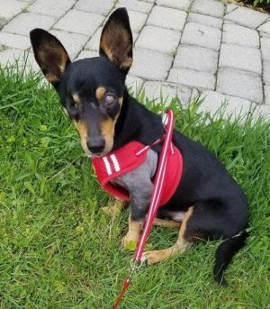 You can fill out an adoption application online on our official websiteTaco TX is a male Chihuahu